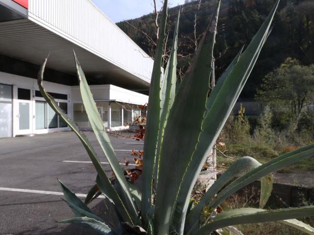 Pabellón industrial en venta en Anoeta, Tolosaldea, Gipuzkoa 34